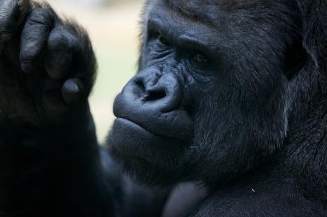 Тест 70-200 в Зоопарке
