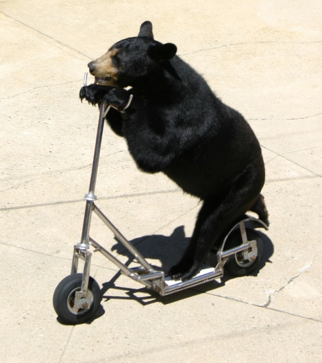 bear_on_a_tricycle
