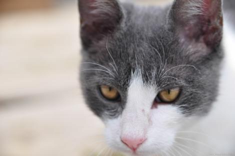 Cat head closeup