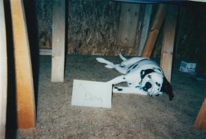 spot_the_dog
