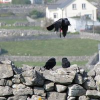 On the Origin of Eating Crow and Humble Pie