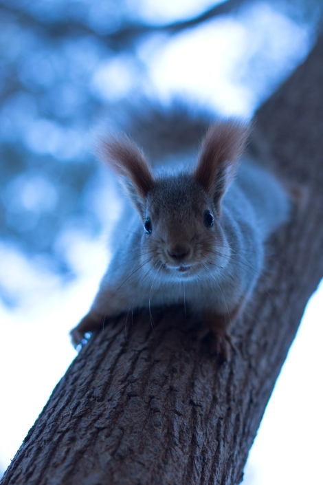 squirrel_in_tree